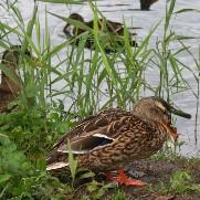 Naturdyrenes Dagbog 2010 - nyttedyr i haven