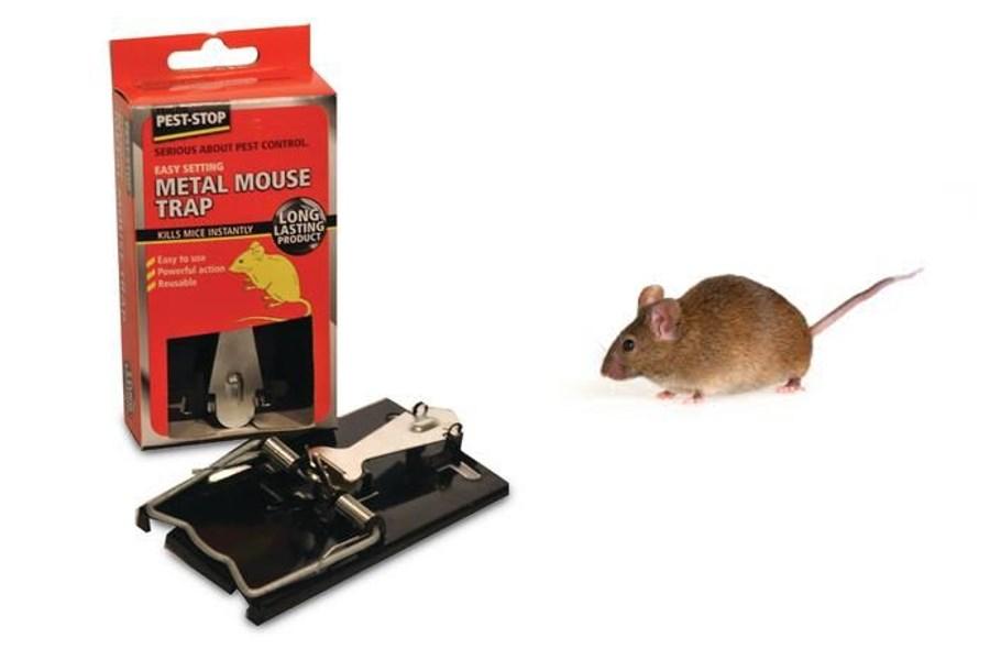 fange mus indendørs
