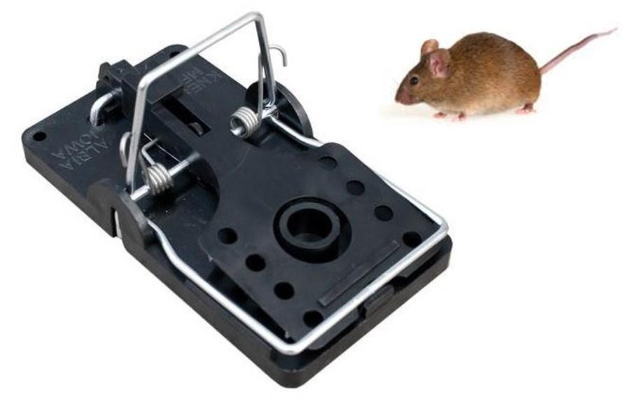 halsbåndsmus eller rotte