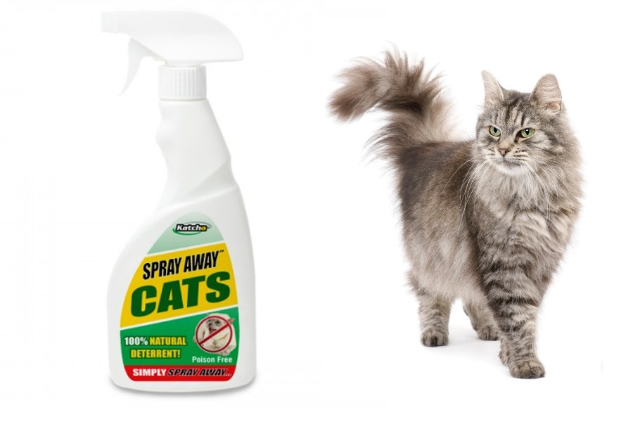 Gå væk kat udendørs