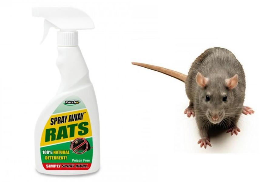 død rotte lugt