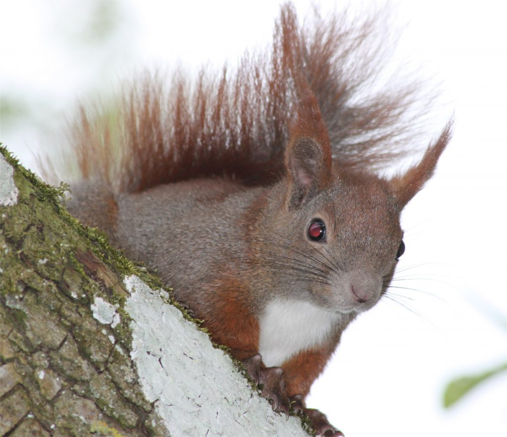 egern_om_vinteren