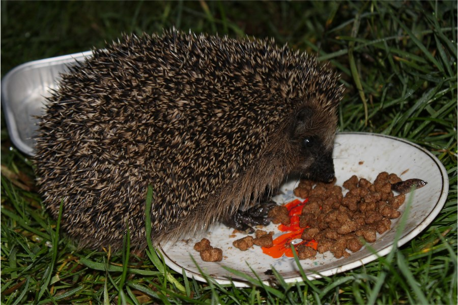 Spike's pindsvinefoder
